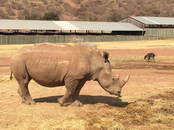 rhino1_880x500