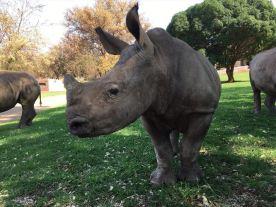 rhino4_880x500