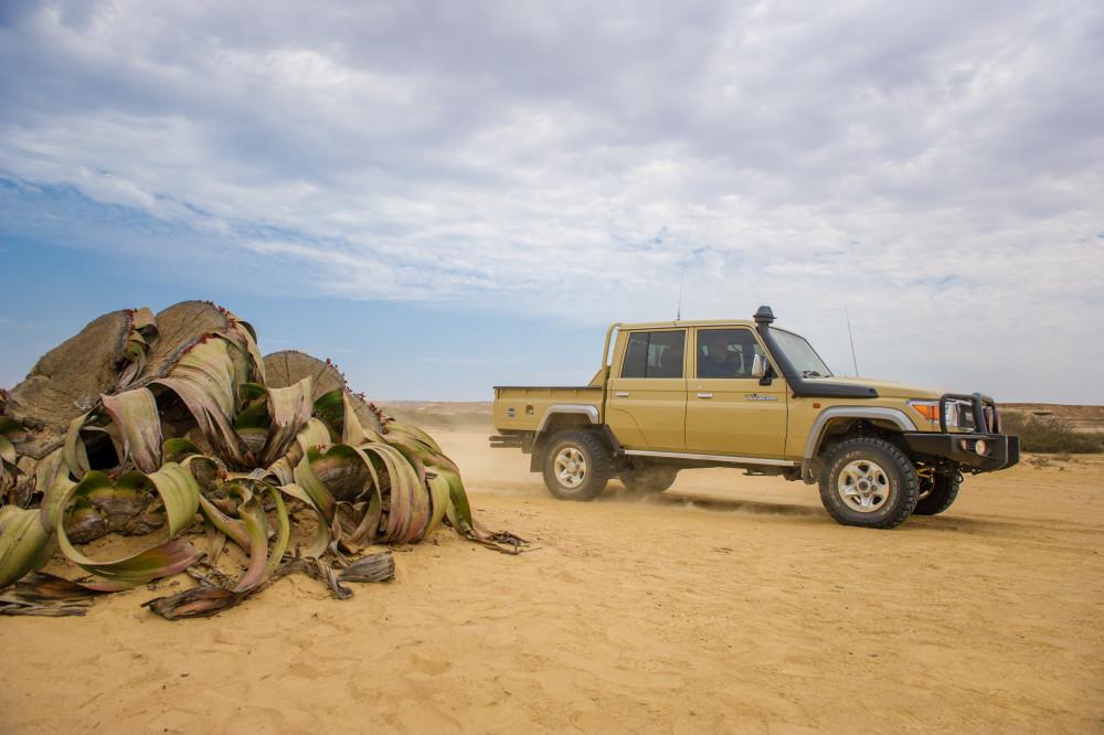 Coolest Land Cruiser isback